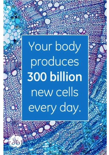 Your body produces